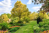 Hêtre à feuilles de fougères, Fagus sylvatica 'Asplenifolia', France, Cher (18), Apremont-sur-Allier, labellisé Plus Beaux Villages de France, Parc Floral d'Apremont-sur-Allier,
