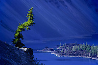 Croked pine tree on the crater rim of Crater Lake oregon