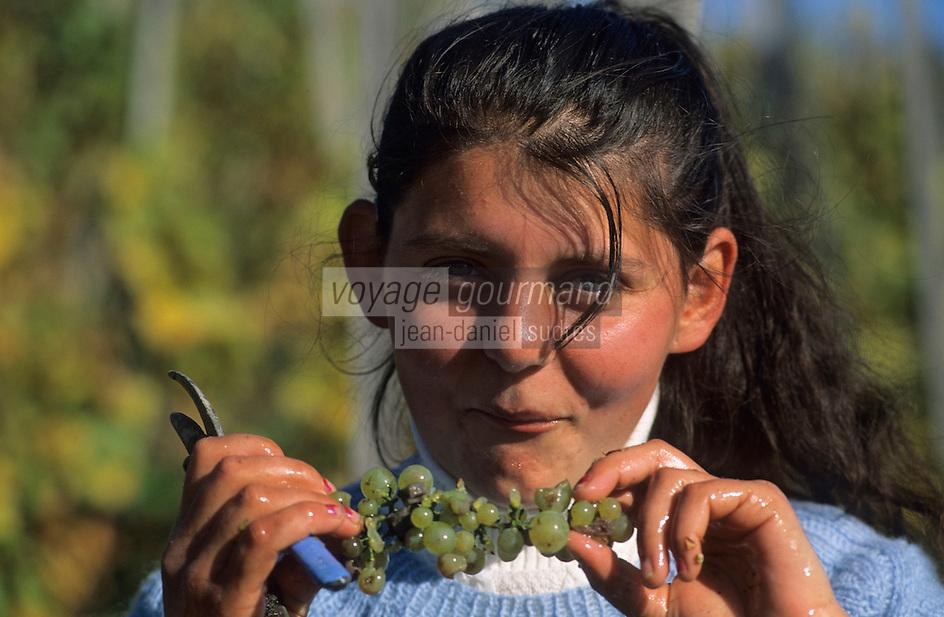 Europe/Hongrie/Tokay/Env Sarospatak: Les vignes du château Megyer - Vendanges manuelles - Vendangeuse tzigane