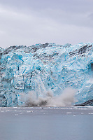 Harvord tidewater glacier claves chunks of ice into College Fjord, Prince William Sound, Alaska.