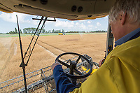 Harvesting linseed with a New Holland CSX 7080 combine -  August, Cambridgeshire