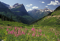 AJ3603, Glacier National Park, Montana, Rocky Mountains, wildflowers, Waterton-Glacier International Peace Park, Scenic view of the majestic mountains and beautiful pink wildflowers of Glacier National Park in the state of Montana.