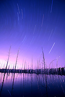 Night Sky & Star Trails over an Atlantic White Cedar Bog, Chatsworth, New Jersey