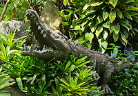 Crocodile sculpture in the gardens of the Hotel Bougainvillea, Santo Domingo de Heredia, Costa Rica