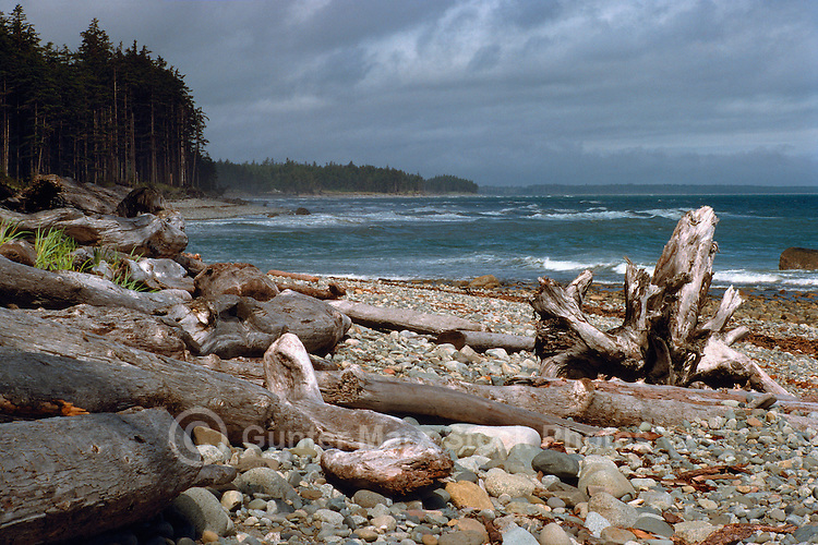 Haida Gwaii (Queen Charlotte Islands), Northern BC, British Columbia, Canada - Driftwood on Agate Beach along McIntyre Bay, Naikoon Provincial Park, Graham Island