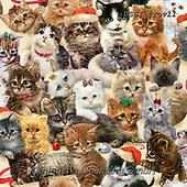 GIORDANO, GIFT WRAPS, GESCHENKPAPIER, PAPEL DE REGALO, Christmas Santa, Snowman, Weihnachtsmänner, Schneemänner, Papá Noel, muñecos de nieve, paintings+++++Fireside Kittens Stack,USGIPROV11,#gp#,#x# ,cat,cats