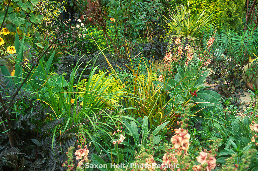 Foliage tapestry with purple, silver, green, and yellow leaf perennials; Anthriscus 'Ravens' Wing', Calamagrostis brachytricha, Verbascum 'Jackie', Libertia
