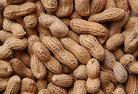 Semi di arachidi..Seed of peanut..  .