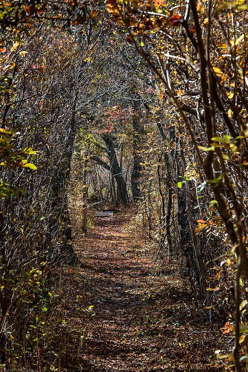 Woodland path, Martha's Vineyard, Massachusetts, USA