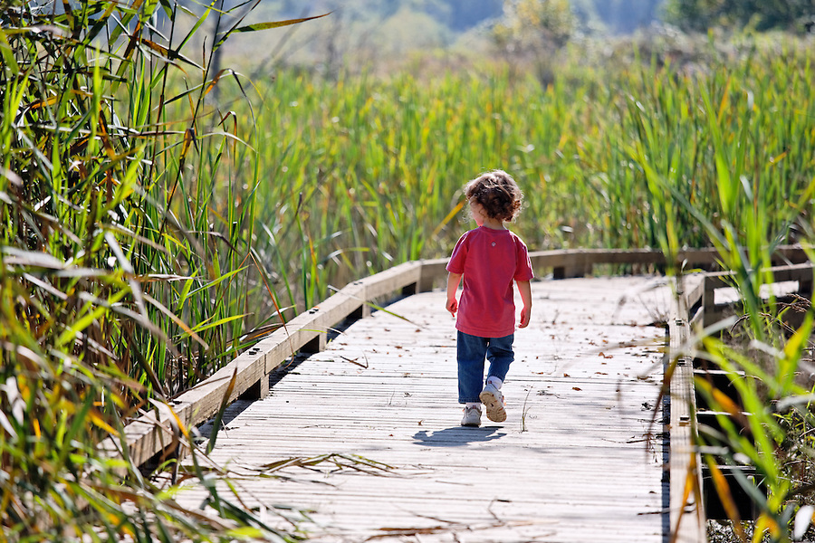 Girl walking on boardwalk trail through wetland, Spencer Island, Everett, Washington, USA