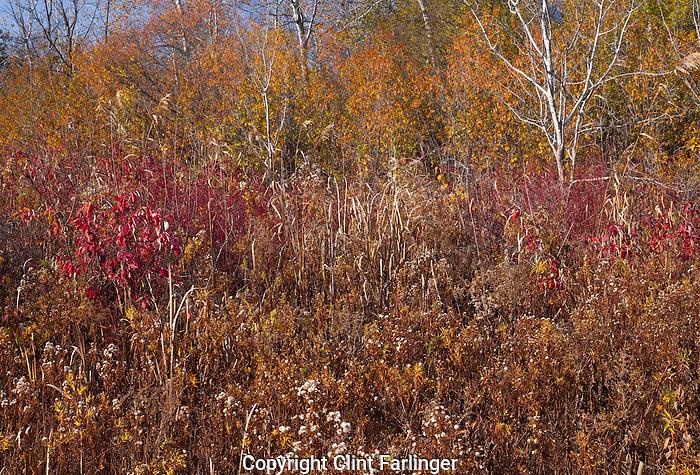 wetlands in autumn, Kishwauketoe Nature Conservancy, Walworth County, Wisconsin