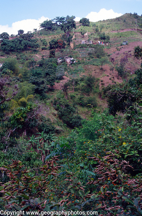 Subsistence farming on steep hillside Blue Mountains, Jamaica