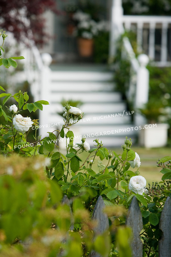 a shallow focus detail shot of white roses on the vine with a white-painted front porch in soft focus behind<br /> <br /> a 2-acre residential garden garden on rural property north of Seattle features recycled, reused, and repurposed materials, a romantic farmhouse cottage garden, and a white garden modeled on the famous garden at Sissinghurst.