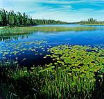 Wetland near Chibougamou, Northern Quebec.                                  .Copyright Garth Lenz. Contact: lenz@islandnet.com www.garthlenz.com