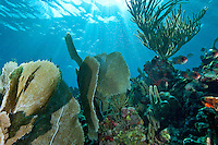 Coral Reef Scenic<br /> Mayreau Channel Garden<br /> Grenadines