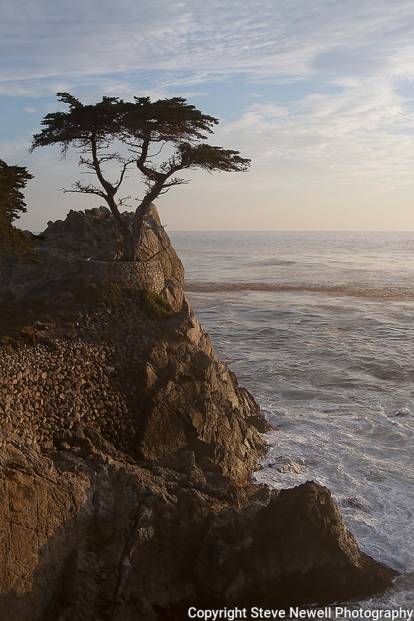 """Only the Lonely"" 17 Mile Drive- Pebble Beach, California.  The famous Lone Cypress Tree on the Pacific Ocean with the waves crashing into the coastline. I took this photograph and had to leave to pick some friends up at the airport in San Francisco.  The sunset colors eventually developed into the image titled ""Monet on Monterey"" ..... which I captured by pulling off the highway and racing to the beach just in time .... arghhhhh"