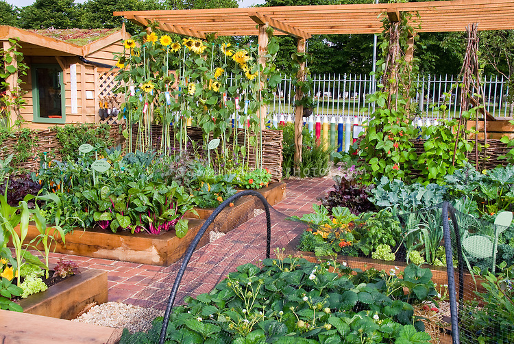 Raised bed vegetable garden with fruit strawberries, sunflfowers, climbing scarlet runner beans vines, house, trellis, protection netting, corn, chard, sunny day