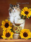 Xavier, ANIMALS, cats, photos, SPCHCATS702,#A# Katzen, gatos