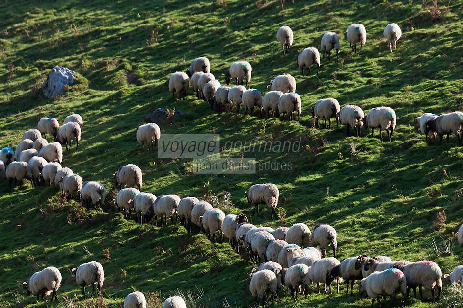 Europe/France/Aquitaine/64/Pyrénées-Atlantiques/Pays-Basque/Aussurucq: Aprés la traite au cayolar ean-Paul Erdozainy Etchart , berger, relache son troupeau de brebis en estive dans les paturages d'Ahusquy