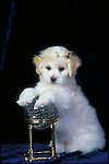 Bichon Frise Shopping cart has 3 Tabs:<br />