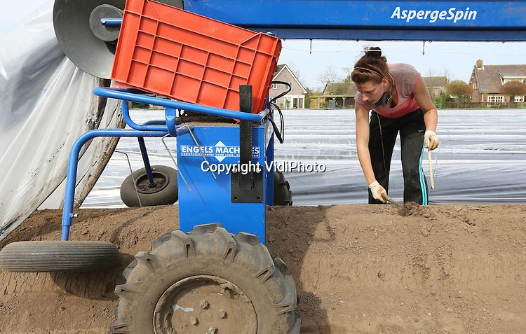 Foto: VidiPhoto<br /> <br /> HEERLE - Poolse aspergesteeksters woensdag aan het werk bij Luysterburg Agrifruit BV in Heerle. Ruim een maand eerder dan normaal worden er bij de Brabantse akkerbouwer asperges gestoken van de koude grond. Eigenaar Rob Luysterburg is verrast over de kwaliteit van het product. &quot;Dit is ongekend.&quot; In tegenstelling tot de hoge prijzen van begin vorig jaar, is er nu sprake van &quot;nette prijzen voor zowel teler als consument.&quot; Lysterburg heeft 12 ha. asperges die via veiling Greenery de weg naar de supermarkten vinden.