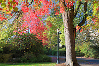 Trees in memorial Union Quad with fall color. Oregon State University.