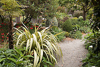Phormium along gravel path; tree fern on left. Sally Robertson Garden.