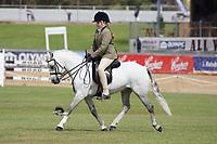 Child's Hunter Pony over 12.2 NE 13hh