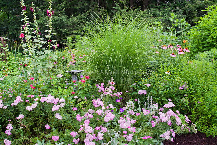 Backyard perennial bed plant flower stock photography for Ornamental grass bed design