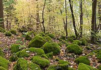 Yosemite Dogwoods