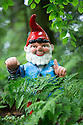 29/05/15<br /> <br /> Hiding in the bracken.<br /> <br /> For one group of hardy folk, today's rain only adds to the fun that can be had by the beach, fishing in the river, or playing in the woods.<br /> <br /> The gnomes, and a few pixies and fairies, make up a collection, now believed to be close to 2,000 individuals, that 'live' at the Gnome Reserve near Bideford, North Devon.<br /> <br /> Visitors are asked to wear gnome hats, so as not to scare the gnomes who feature as the largest collection in the Guinness Book of World Records. <br /> <br /> Ann Atkin's collection began in 1979 and features traditional gnomes on toad-stools to Olympian athletes, astronauts who work for 'GNASA', a beach scene complete with gnomes in bikinis, a queue for the ice-cream van, Punch and Judy gnomes and another floating on a lilo. Other gnomes can be scene kissing, and flashing their bottoms as the visit the Gents and Ladies toilets. <br /> <br /> <br /> All Rights Reserved - F Stop Press.  www.fstoppress.com. Tel: +44 (0)1335 418629 +44(0)7765 242650
