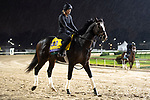 November 1, 2018: Yoshida (JPN), trained by William I. Mott, exercises in preparation for the Breeders' Cup Classic at Churchill Downs on November 1, 2018 in Louisville, Kentucky. Jamey Price/Eclipse Sportswire/CSM