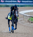 LOUISVILLE, KENTUCKY - APRIL 30: Roadster, trained by Bob Baffert, exercises in preparation for the Kentucky Derby at Churchill Downs in Louisville, Kentucky on April 30, 2019. Scott Serio/Eclipse Sportswire/CSM