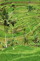 Ubud area Bali, Indonesia