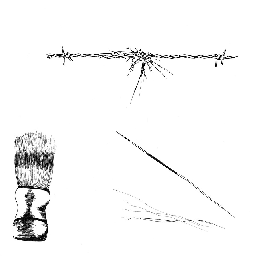 Das (Melis melis), badger hairs and their usage in shaving brushes