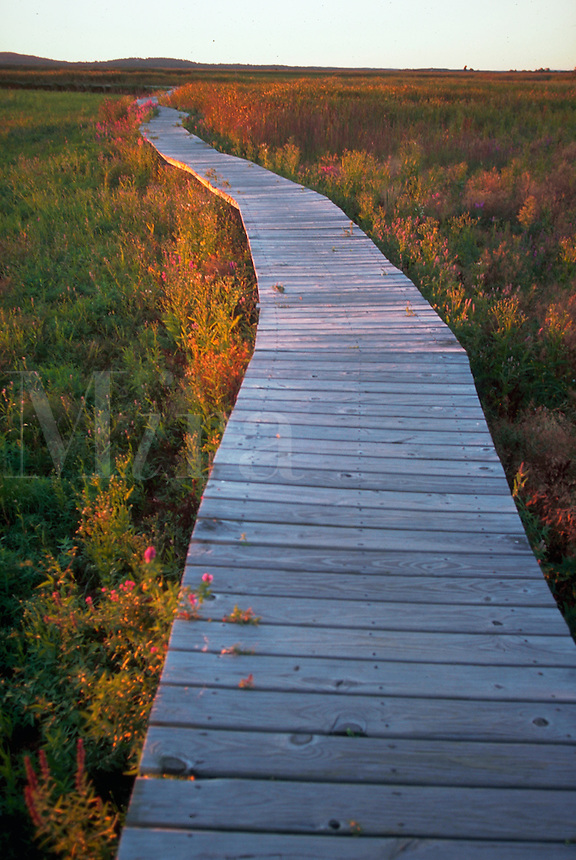 Hellcat Swamp boardwalk on Plum Island. Newburyport, Massachusetts.