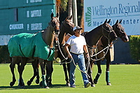 WELLINGTON, FL - DECEMBER 31:  Scenes from the Herbie Pennell Cup Final, at the International Polo Club Palm Beach, on December 31, 2017 in Wellington, Florida. (Photo by Liz Lamont/Eclipse Sportswire/Getty Images)