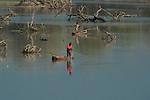 Fishermen, Luangwa River