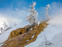 Yellowstone National Park, WY: Hoar frosted trees and thermal steam on the lower terraces of Mammoth Hot Springs