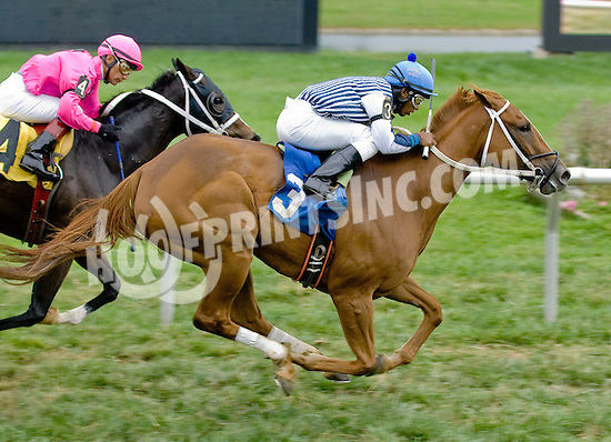 Sweet Little Lion winning at Delaware Park on 9/29/12
