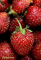 ST04-013c  Strawberries - Sparkle variety