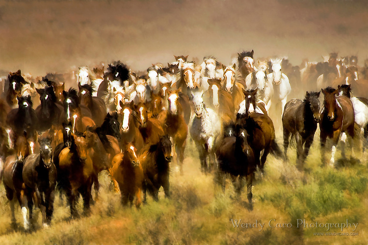 Horses stampeding away from wranglers, during roundup and horse drive, northwest Colorado