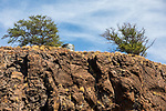 Haleolono Harbor Cliffs