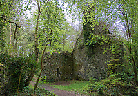 The remains of a structure are being enveloped by the vegetation of Dromore Wood.
