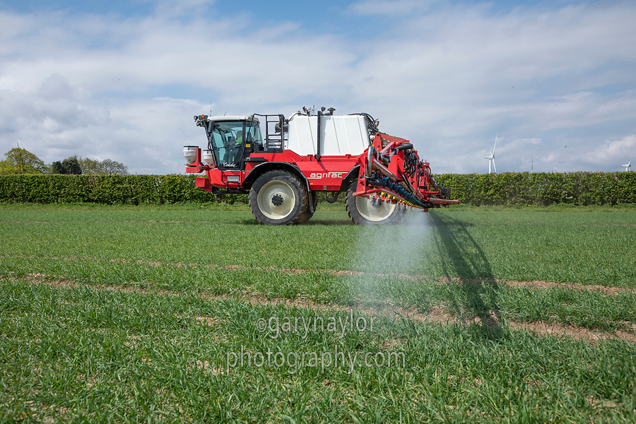 Spraying wheat with fungicide - Licolnshire, April