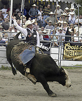 "24 August, 2004:  PRCA Rodeo Bull Rider Steven Woolsey riding the bull ""Little Man"" during the PRCA 2004 Extreme Bulls competition in Bremerton, WA."