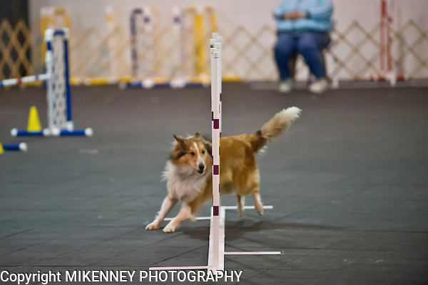 Central New York Shetland Sheepdog Club AKC Agility Trials held at Boomtowne Canine Campus in Farmington NY January 18th through 20th 2013