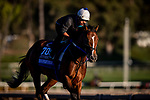 OCT 25: Shoplifted gallops at Santa Anita Park in Arcadia, California on Oct 25, 2019. Evers/Eclipse Sportswire/Breeders' Cup
