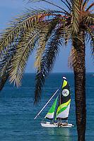 Europe/France/Provence-Alpes-Côte d'Azur/Alpes-Maritimes/Menton: Palmiers du Front de mer //  Europe, France, Provence-Alpes-Côte d'Azur, Alpes-Maritimes,  Menton:   waterfont palms