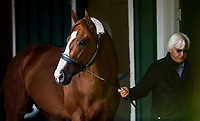 BALTIMORE, MD - MAY 16:  Justify with trainer Bob Baffert arrives at Pimlico Racecourse on May 16, 2018 in Baltimore, Maryland. (Photo by Alex Evers/Eclipse Sportswire/Getty Images)